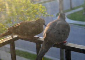 birdies5