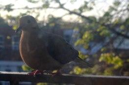 birdies8