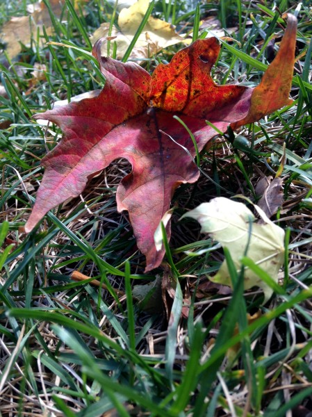 leaves6