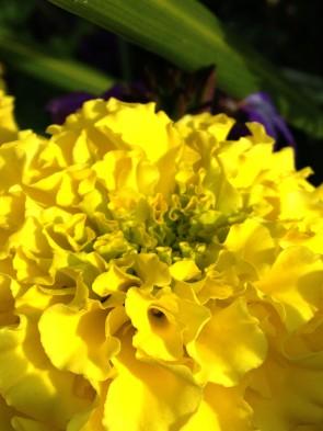 yellow flower 2
