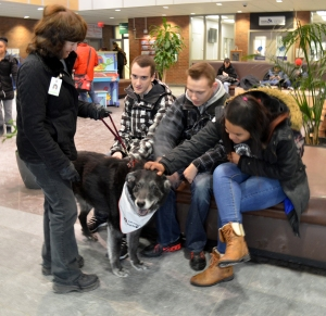 Durham College students destress with Harley the St. John Ambulance therapy dog and his owner Karen Waters.
